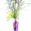 Planter Table- Top CC-48