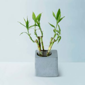 Concrete Greenin Handmade Desk Planter Gmpl001 1