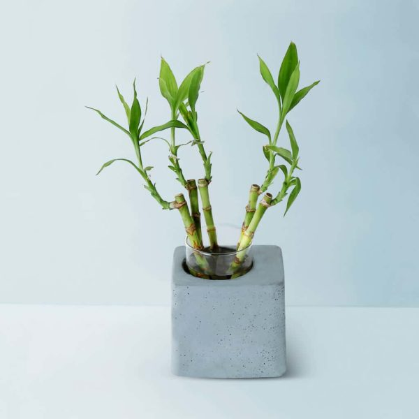 Concrete Greenin Handmade Desk Planter Gmpl001 1