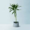 Greeno (B) – Floor Planter