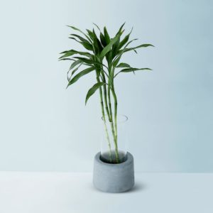Wonderwheelstore | 30 | Concrete Round Small Glass Planter Gmpl002 1